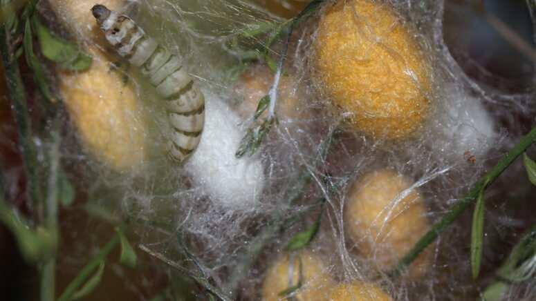 O punćelama i svili